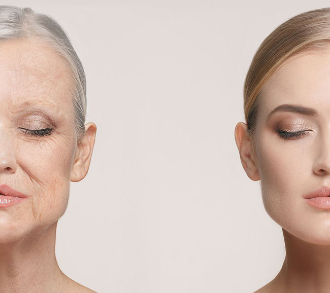 The Anatomy of Ageing Skin